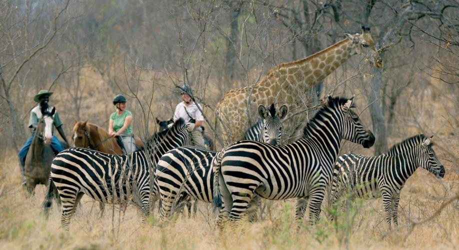 Experience the African wildlife